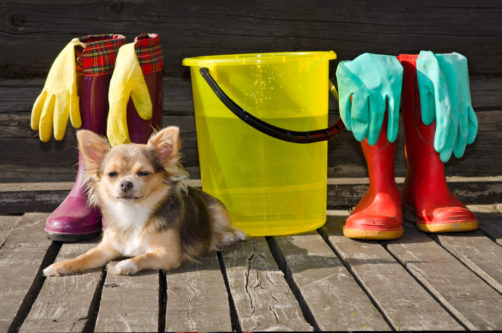 Pet Safe Cleaning Products Dog