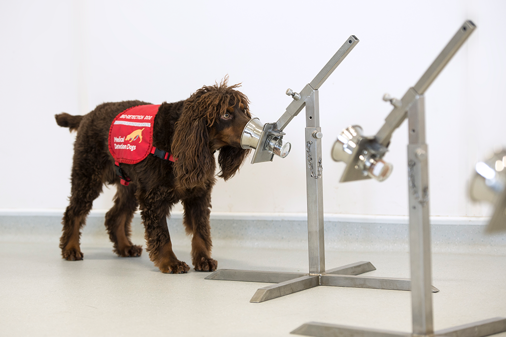 Medical Detection Dogs Interview