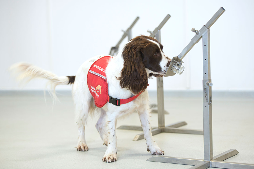 COVID-19 Medical Detection Dogs