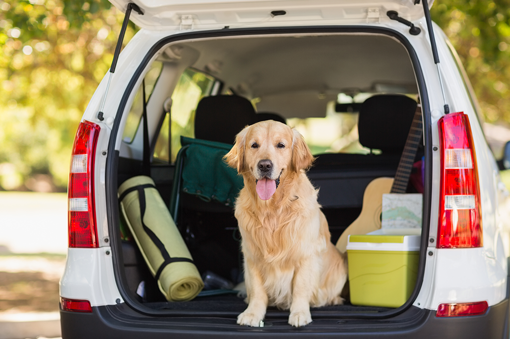 Taking your pet on holiday dog in car