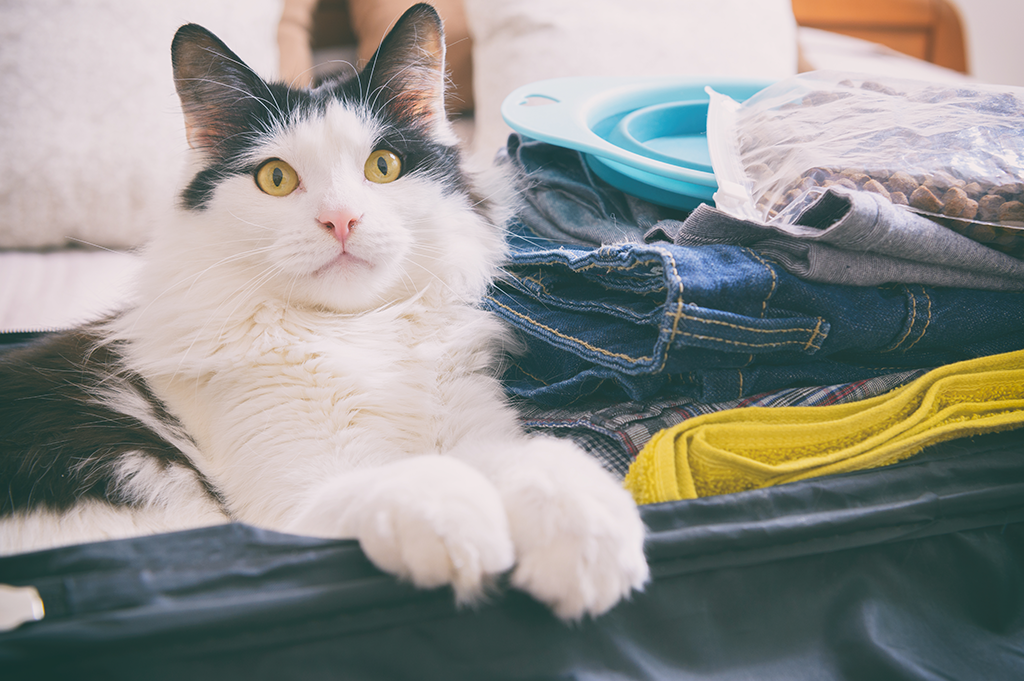 Taking your pet on holiday