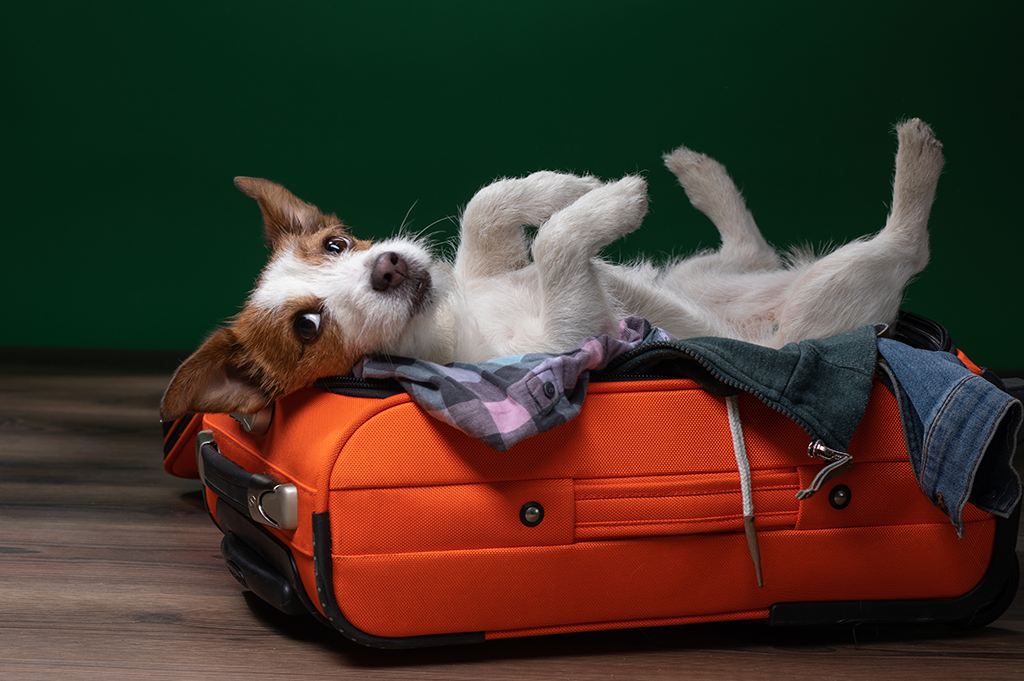 Taking your pet on holiday dog in suitcase