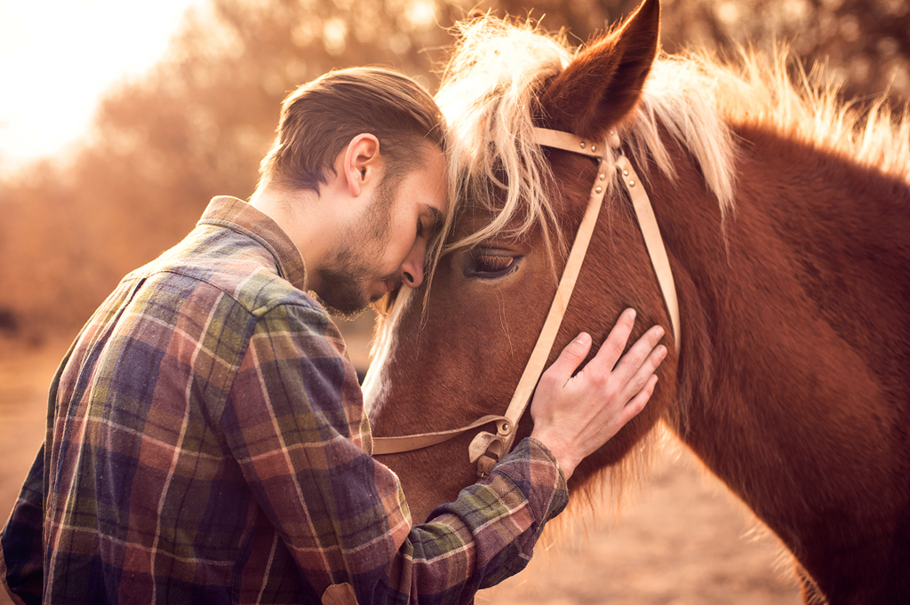 Microchipping horse