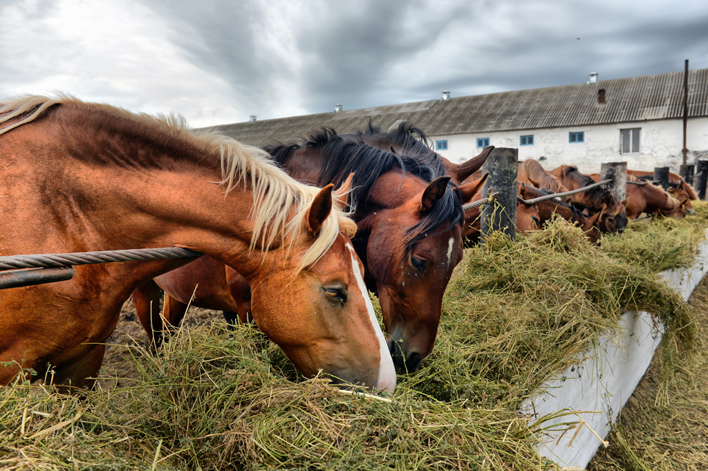 Electrolytes for horses eating hay