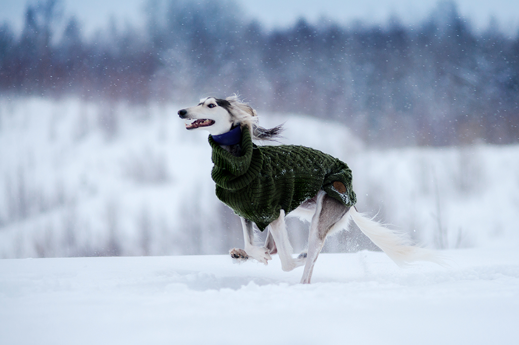 winter pet health dog with coat