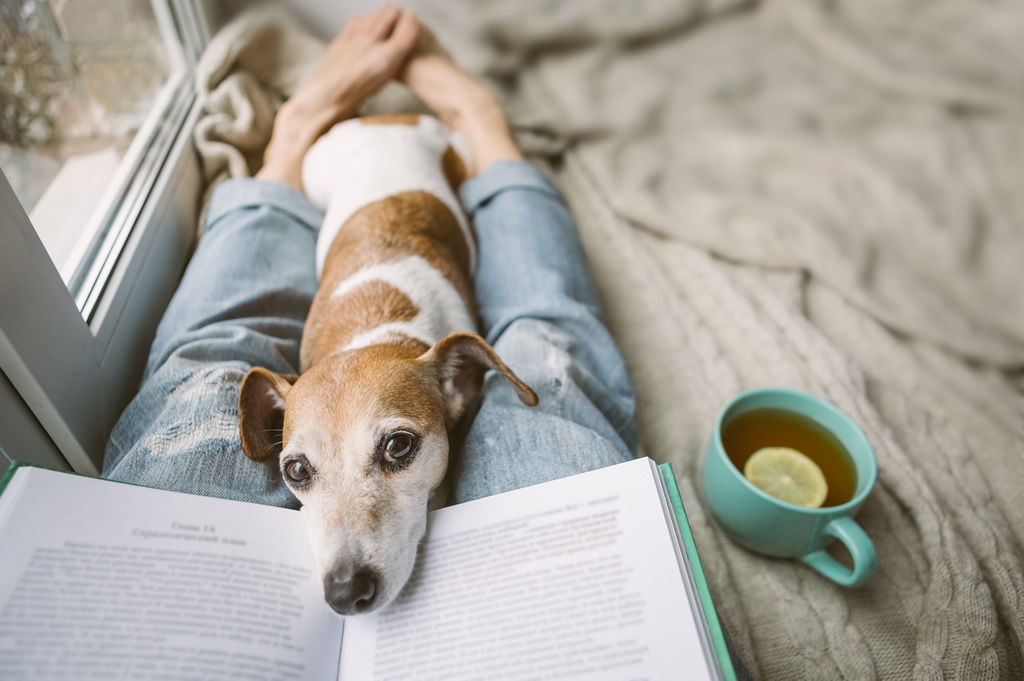 Dog laying on owner whilst they are reading a book.